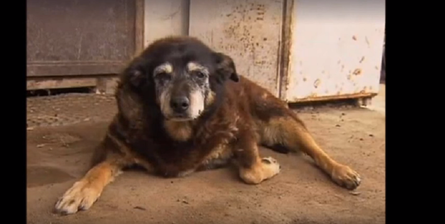 Maggie, The Oldest Dog In The World, Passes Away